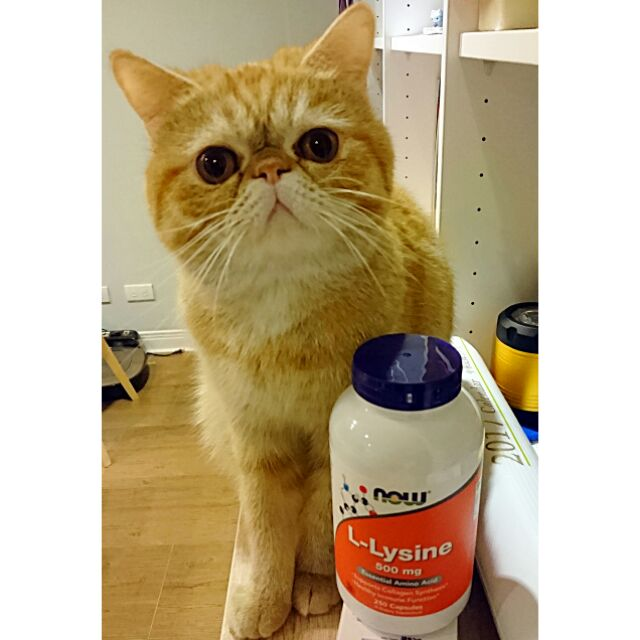 貓奴媽媽的營養學分Now Foods 貓用離胺酸L Lysine 500 mg 250 顆