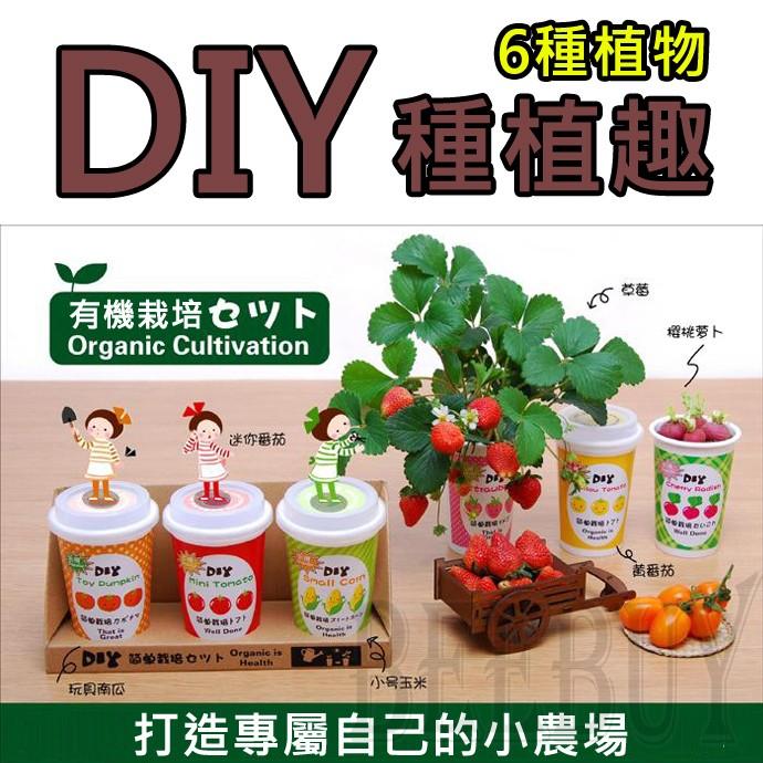 DIY 有機種植六種植物草莓櫻桃蘿蔔黃番茄玩具南瓜迷你番茄小號玉米享受種植樂趣家庭造景裝飾
