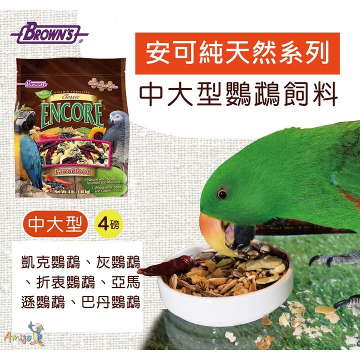 金瑞成鳥園布朗氏安可純天然中大型鸚鵡美國 豐盛、健康、安全 中大型鸚鵡