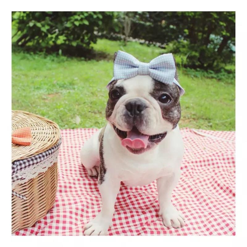 ۞芙芙遊樂園۞( )泰迪金毛法鬥牛犬純 小領結小中型犬圍脖點點領結寵物狗狗飾品(西裝領帶布