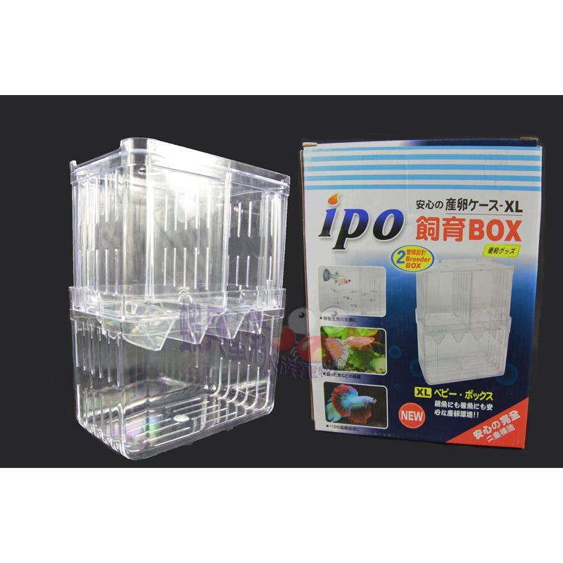 蝦兵蟹將~ T F 同發~~IPO 自浮式飼育盒,XL 款~雙層式 ,繁殖盒、隔離盒