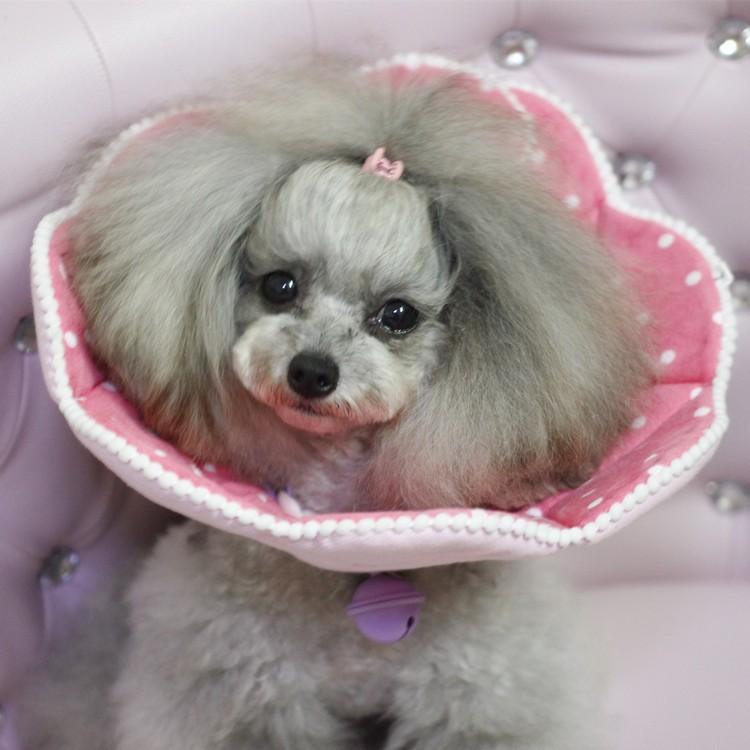 PETSTYLE 印花伊麗莎白圈全棉狗貓用項圈美容罩寵物圍脖防咬舔抓傷口