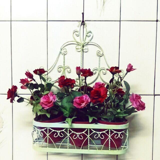 愛家小舖仿真盆栽3 盆ㄧ籃牆面裝飾療癒小品