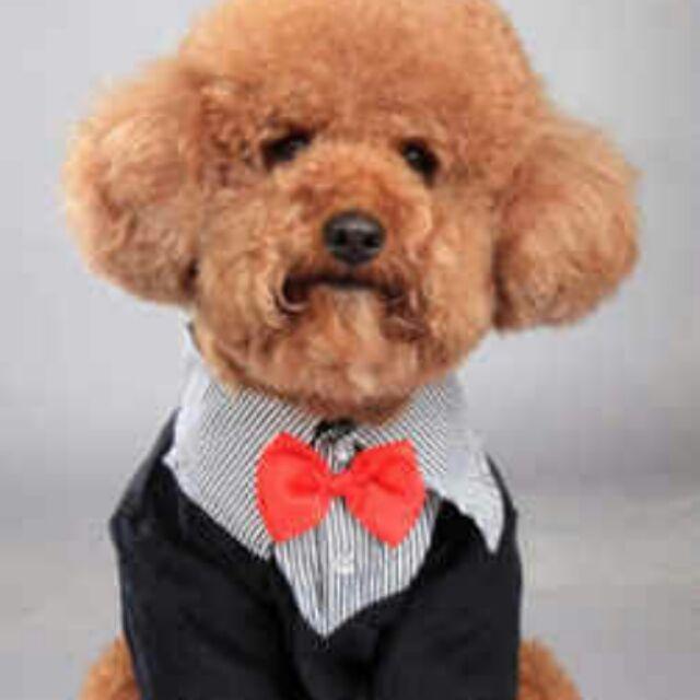 犬寶貝外銷 品牌寵物衣服狗狗西裝禮服婚禮 殺到150 元起大狗