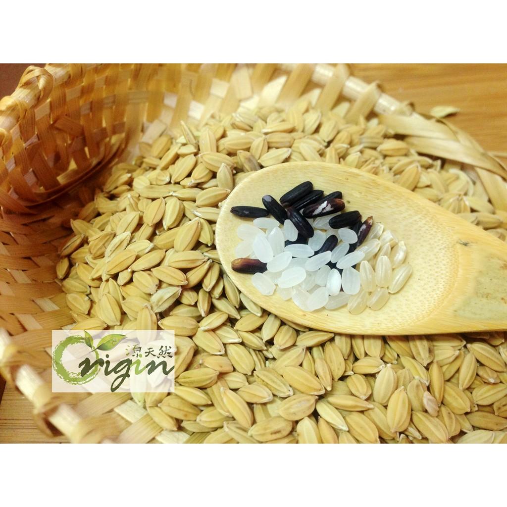 ~源天然~池上健康米黑米胚芽糙米白米免浸泡多穀營養友善農法 嬰童與銀髮