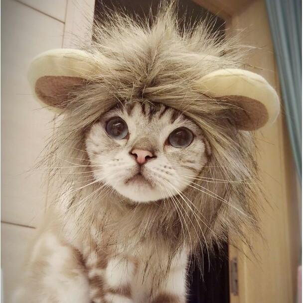 一秒變獅子貓咪狗狗搞笑獅子頭套獅子假髮寵物變裝貓頭飾可愛假髮寵物用品貓帽子