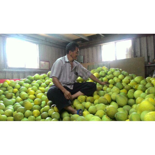八里有機文旦柚子一箱約五台斤
