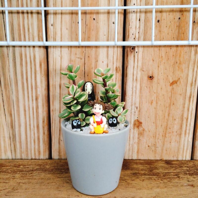 園丁實驗室DIY 盆栽花盆花器三吋雅樂之舞小灰色杯盆器多肉植物仙人掌龍貓