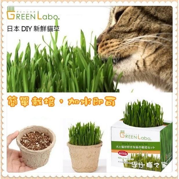 Green Labo ~DIY 新鮮貓草燕麥草~來自 ,無農藥栽培,犬貓皆可食用(非一般小