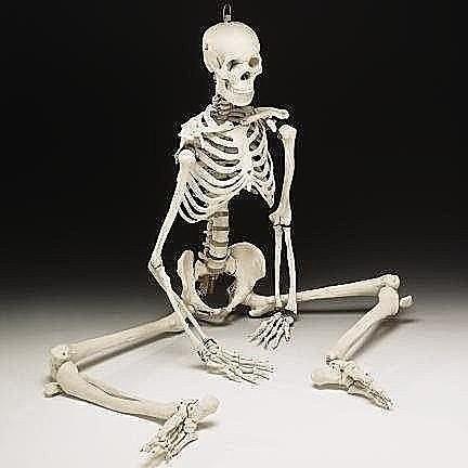 新品新品85CM 人體骨骼模型85cm 骨架模型骷髏模型可擺姿勢骨架人