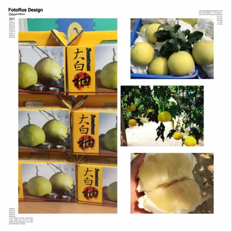 麻豆大白柚 ( )老欉甜
