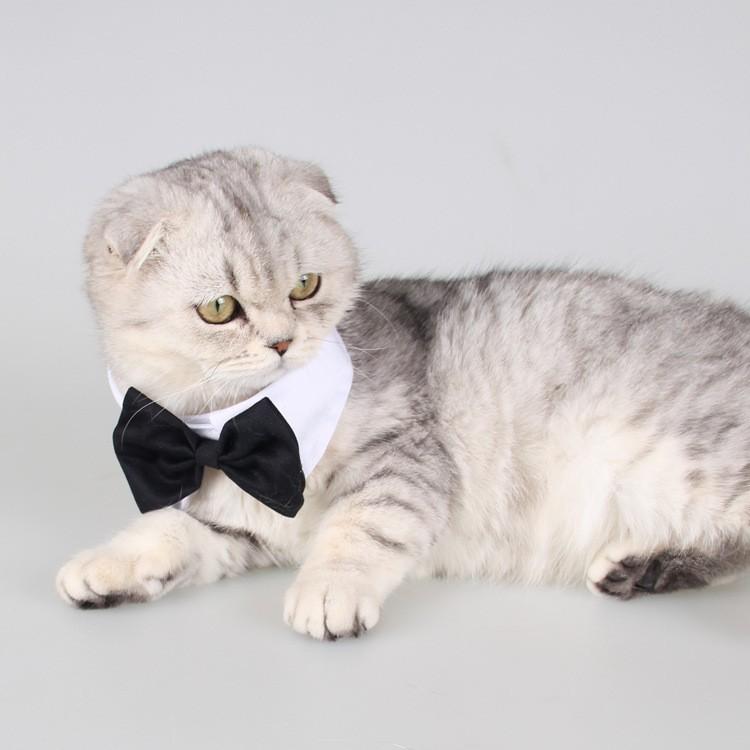 PETSTYLE 寵物領結寵物飾品狗狗領結領帶萌寵蝴蝶結領巾