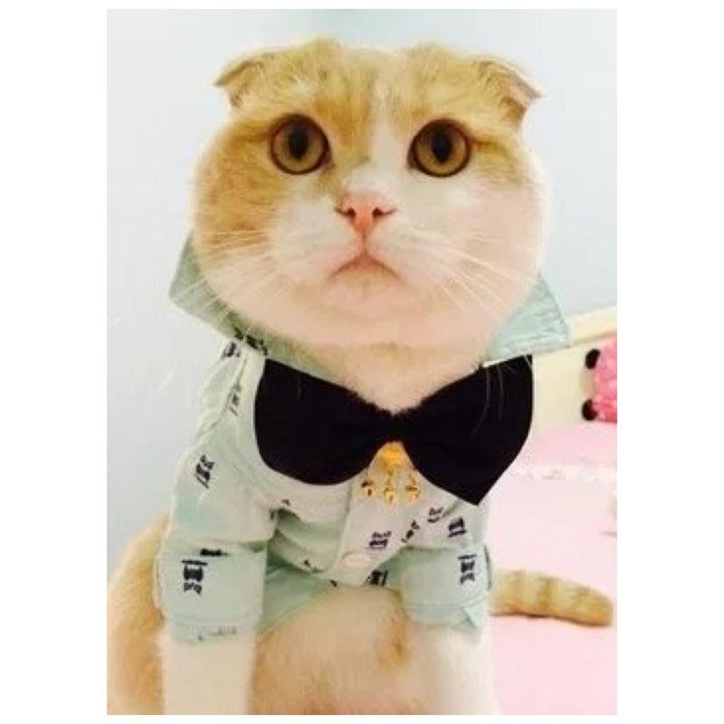 ۞芙芙遊樂園۞( )2016 英倫紳士泰迪襯衫小貓咪狗狗衣服比熊貴賓打底衫寵物貓 裝西裝(