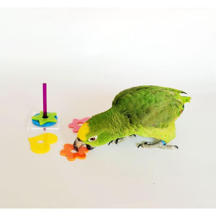 鸚鵡益智玩具可愛圖形套圈訓練互動智力開發玩具