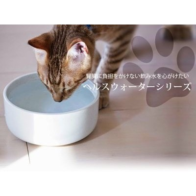 ~喵嗚Meow ~ 最夯貓咪多喝水~Aukatz 瓷器~貓咪狗狗多喝水碗M