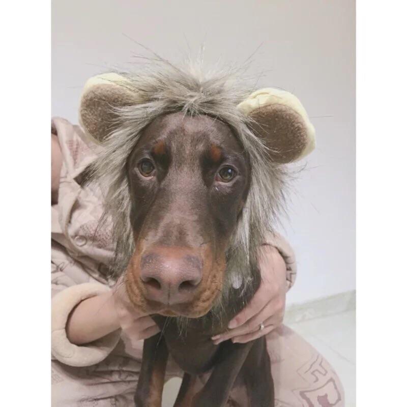 小獅子王小耳朵寵物頭套犬喵貓