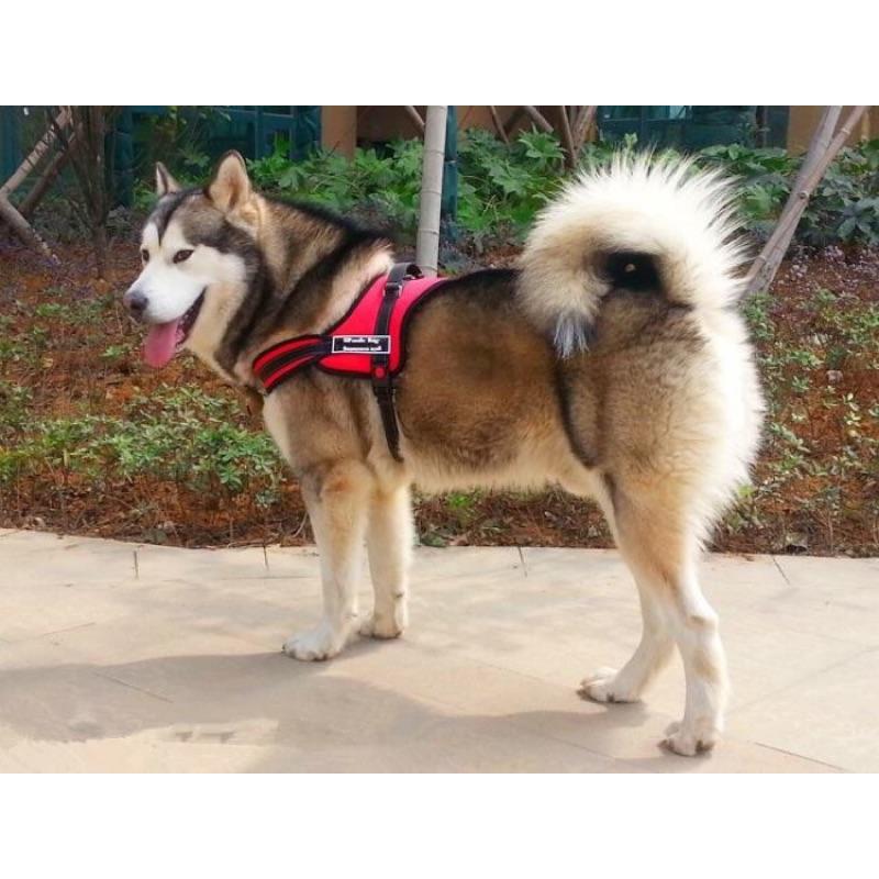 中大型犬防爆衝防鎖扣胸背帶