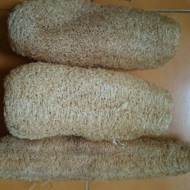 小農種植古早絲瓜纖維菜瓜布絲瓜布絲瓜絡絲瓜菜瓜布