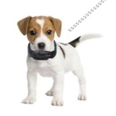 狗狗GPS 追蹤器衛星定位用途廣泛小孩老人物品跟蹤監聽等