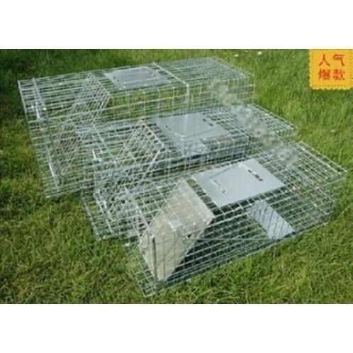 捕狗籠捕兔籠折疊式捕貓籠誘捕籠黃鼠狼籠松鼠籠捕貓器XL 號