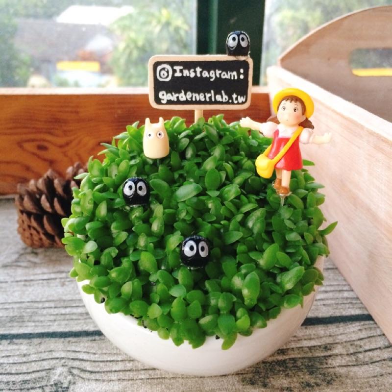 園丁實驗室DIY 盆栽花盆花器三吋綠鑽斜口圓碗白瓷盆器多肉植物仙人掌龍貓