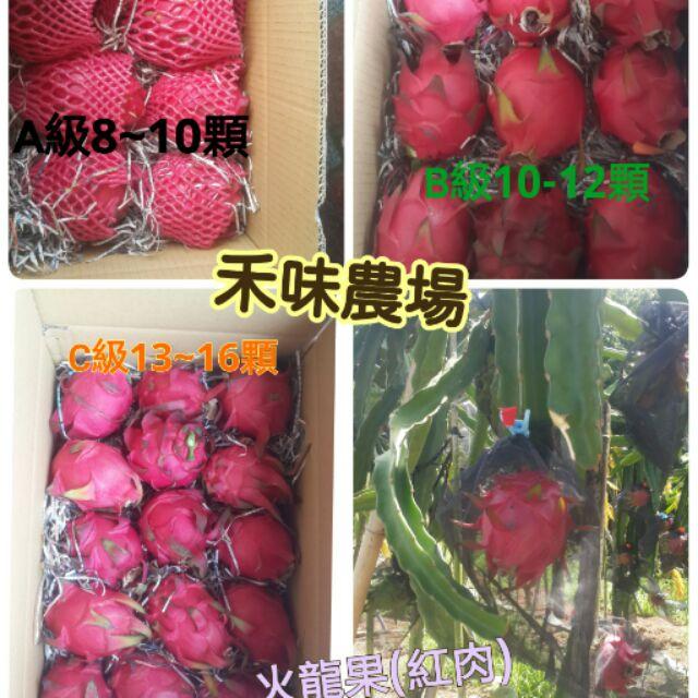 台南玉井禾味農場火龍果紅肉