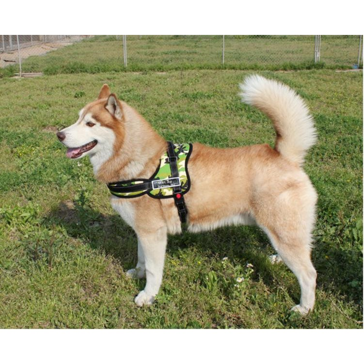 防暴衝中大型犬用胸背、豪華型訓練式胸背帶、豪華馬鞍型胸背帶寵物胸背工作犬 胸背帶