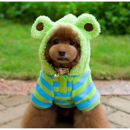 狗❤貓~可愛保暖‧變身裝~我是小青蛙4 腳寵物變身裝_ 小型犬_ 小狗衣服_ 狗服_ 寵物
