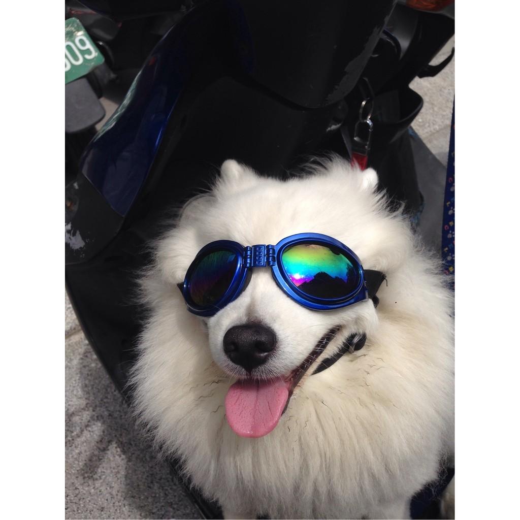 寵物 太陽眼鏡可折疊狗狗防風鏡防水防風防太陽直射眼睛 中大型犬