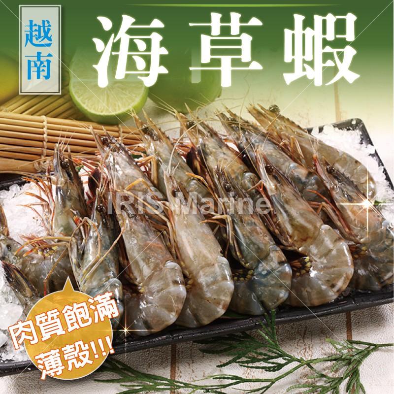 新鮮生凍肉質結實越南海草蝦10 尾入淨重450g ±5 盒包冰率約45 活體急速冷凍