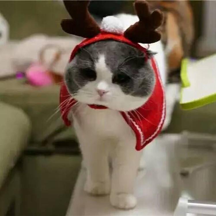 PETSTYLE 聖誕節裝飾品吉仔仔寵物小鹿角頭飾兒童麋鹿角髮飾