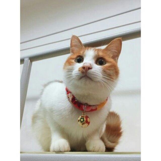 ~寵物的奇幻百寶袋~寵物項圈日式和風無聲鈴鐺招財貓喵喵 項圈