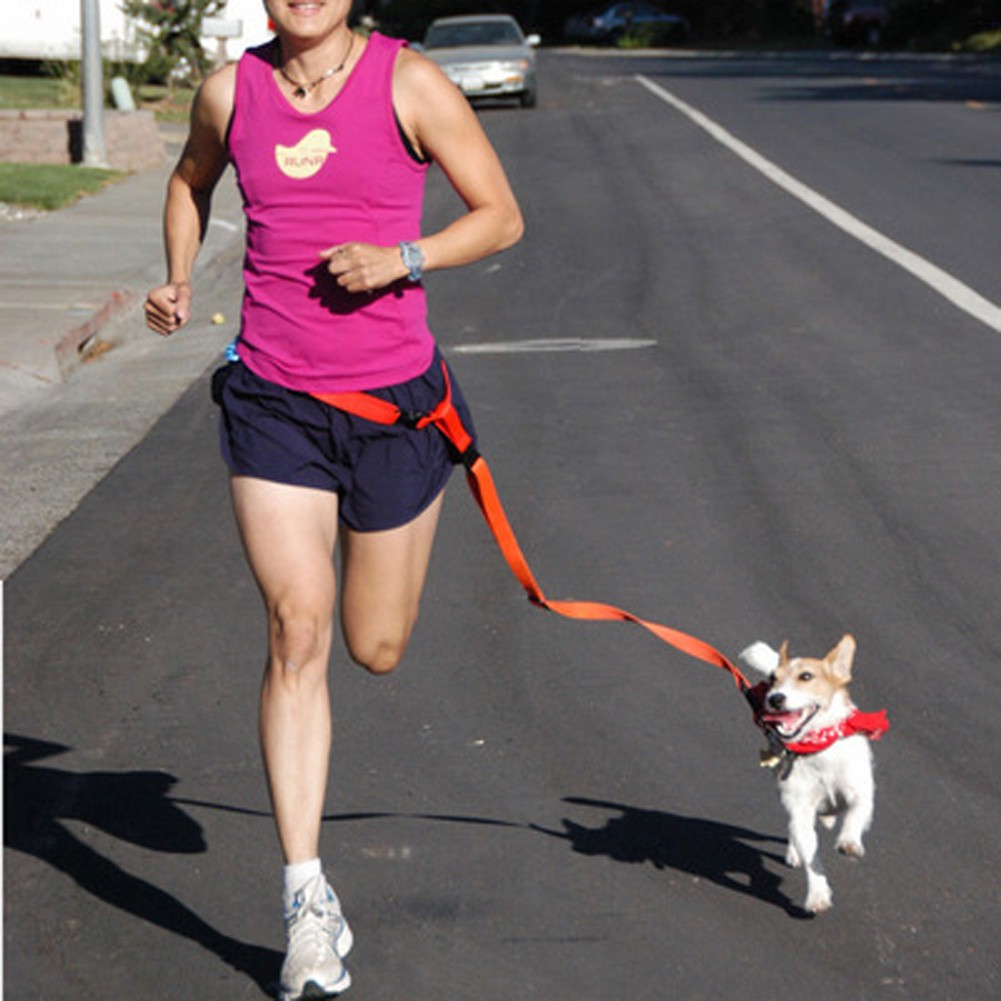 寵物跑步牽引繩晨跑 尼龍狗繩狗狗外出牽引藍色,黑色,紅色,顏色 )