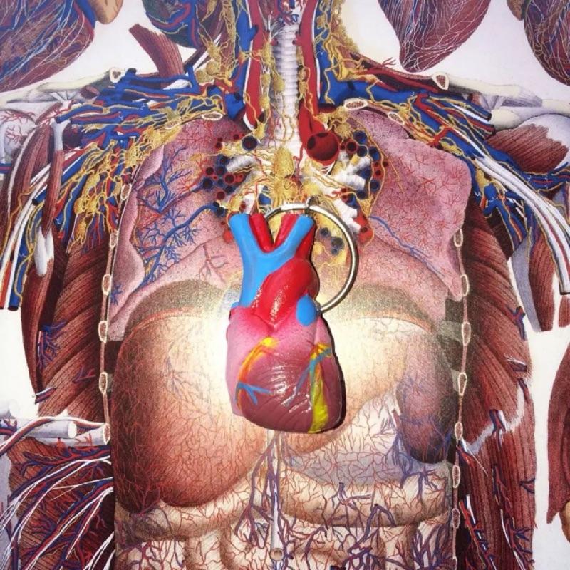 心臟小模型鑰匙圈吊飾器官獵奇人體解剖復古古著玩具收藏vintage