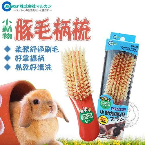 ~幸福培菓寵物~ MARUKAN ~小動物用增量白豚毛刷梳MR 36