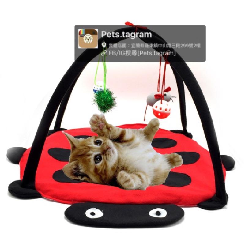 貓星人喵星人的最愛貓貓玩具