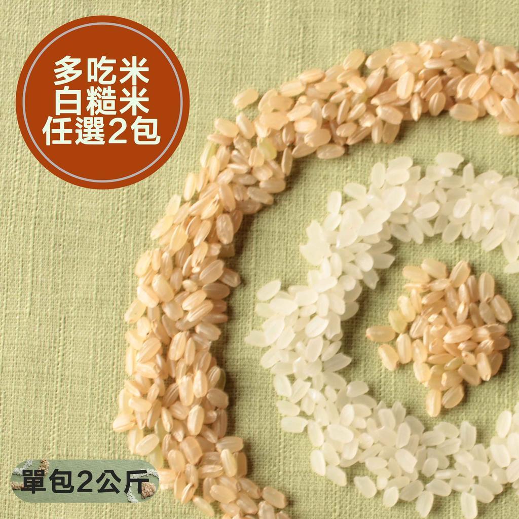 家庭號好米 2 包白米糙米桃園3 號香米台南14 號免浸泡糙米1 包2 公斤友善栽培好米農
