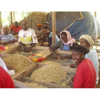 四季生豆咖啡衣索匹亞日曬耶加雪菲艾瑞嘉G1 杯測94 分生豆每公斤390 元