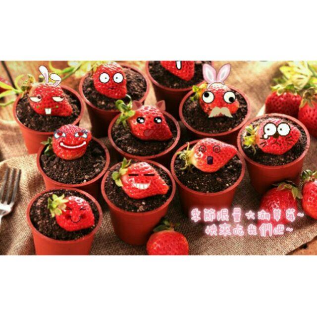 天使( )低溫配送盆栽提拉米蘇蛋糕大湖草莓限定版