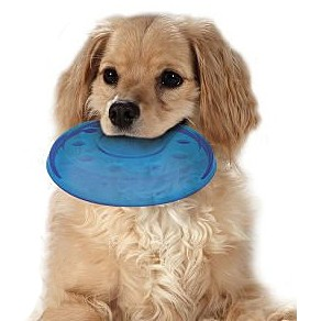Petstages ORKA 迷你飛盤歐卡耐咬系列狗狗玩具啃咬玩具美國寵物玩具紓壓玩具