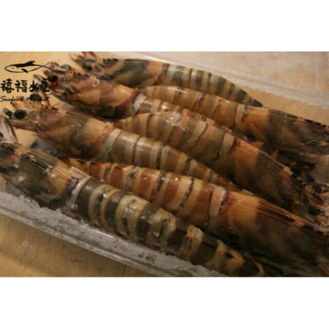 船凍大明蝦斑節蝦~ 540 元10 隻500g ±10 (全場滿2500 免 )