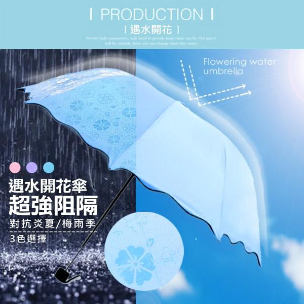 正夯遇水開花隨身傘特殊樂趣 三色 雨中花遇水則花遮陽傘雨傘摺疊傘 雨傘