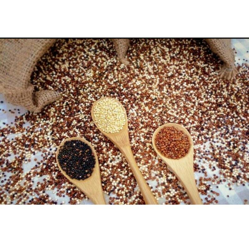 秘魯藜麥紅藜麥黑藜麥白藜麥彩色藜麥