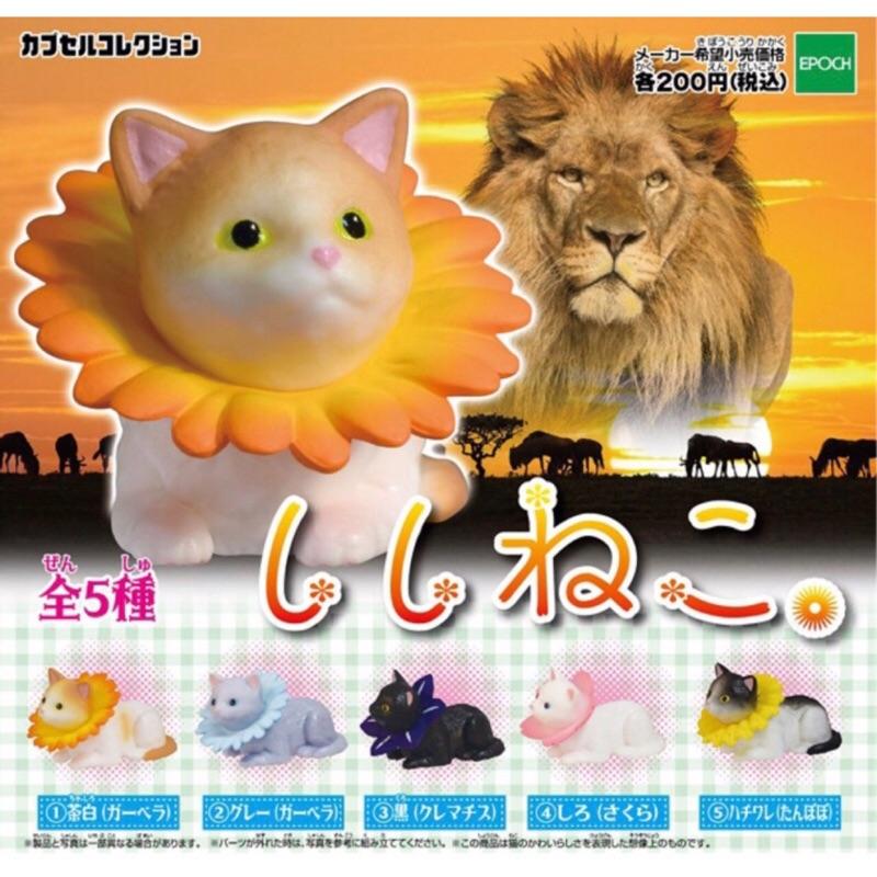獅子貓 花冠貓 扭蛋 轉蛋 食玩 玩具 公仔 玩具