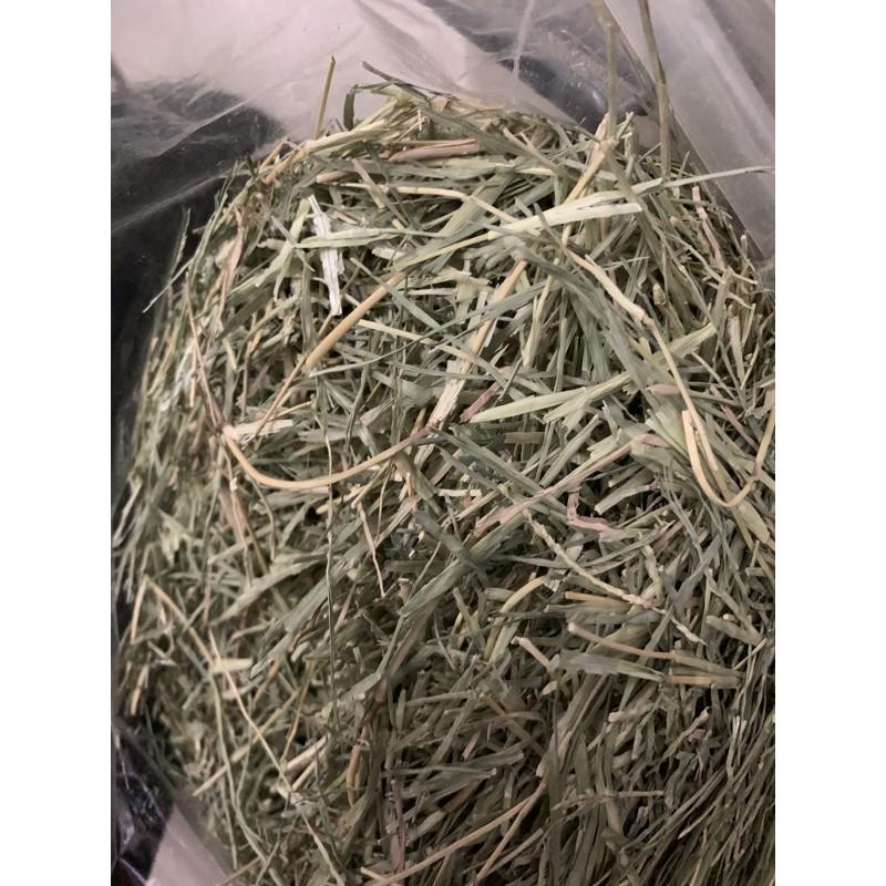 百慕達草 澳洲燕麥 天竺鼠 牧草