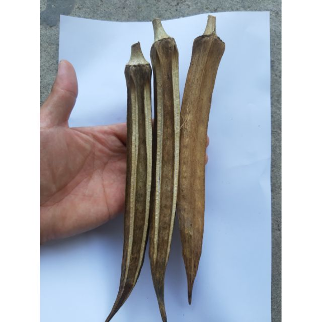 秋葵種子 自家有機種植 矮化分支多 發芽率8-9成以上