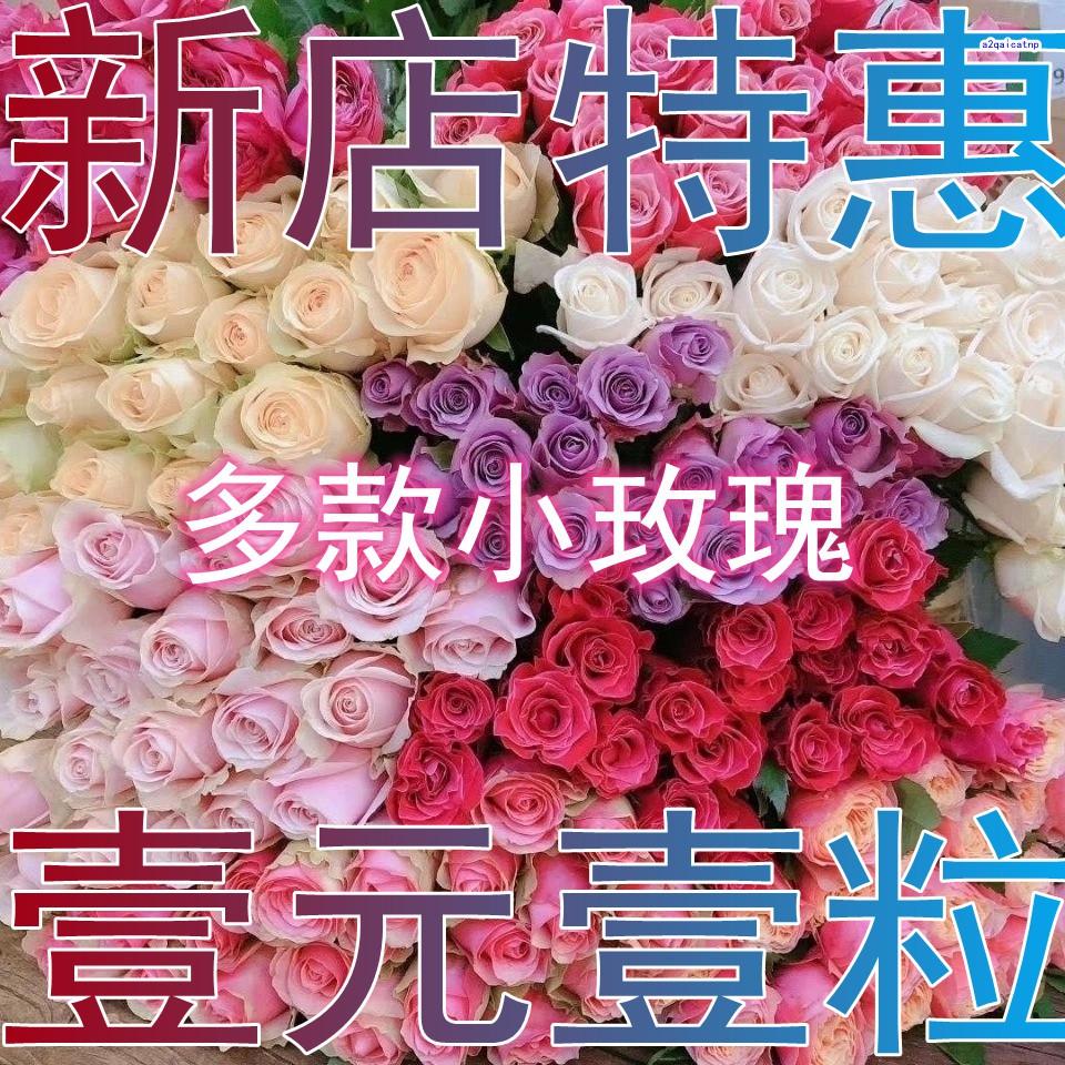 玫瑰花種子 稀有品種 藍色妖姬玫瑰花種籽 超低價 壹元壹粒 發芽率高達99% 新店特惠 月季玫瑰種子