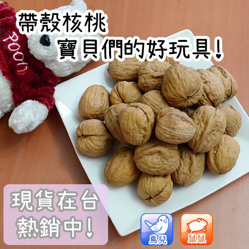 【HamuBabe鼠鼠貝貝】現貨24H內出貨⚡ 帶殼核桃 倉鼠 鸚鵡 玩具 飼料 零食 健康 磨牙 玩樂