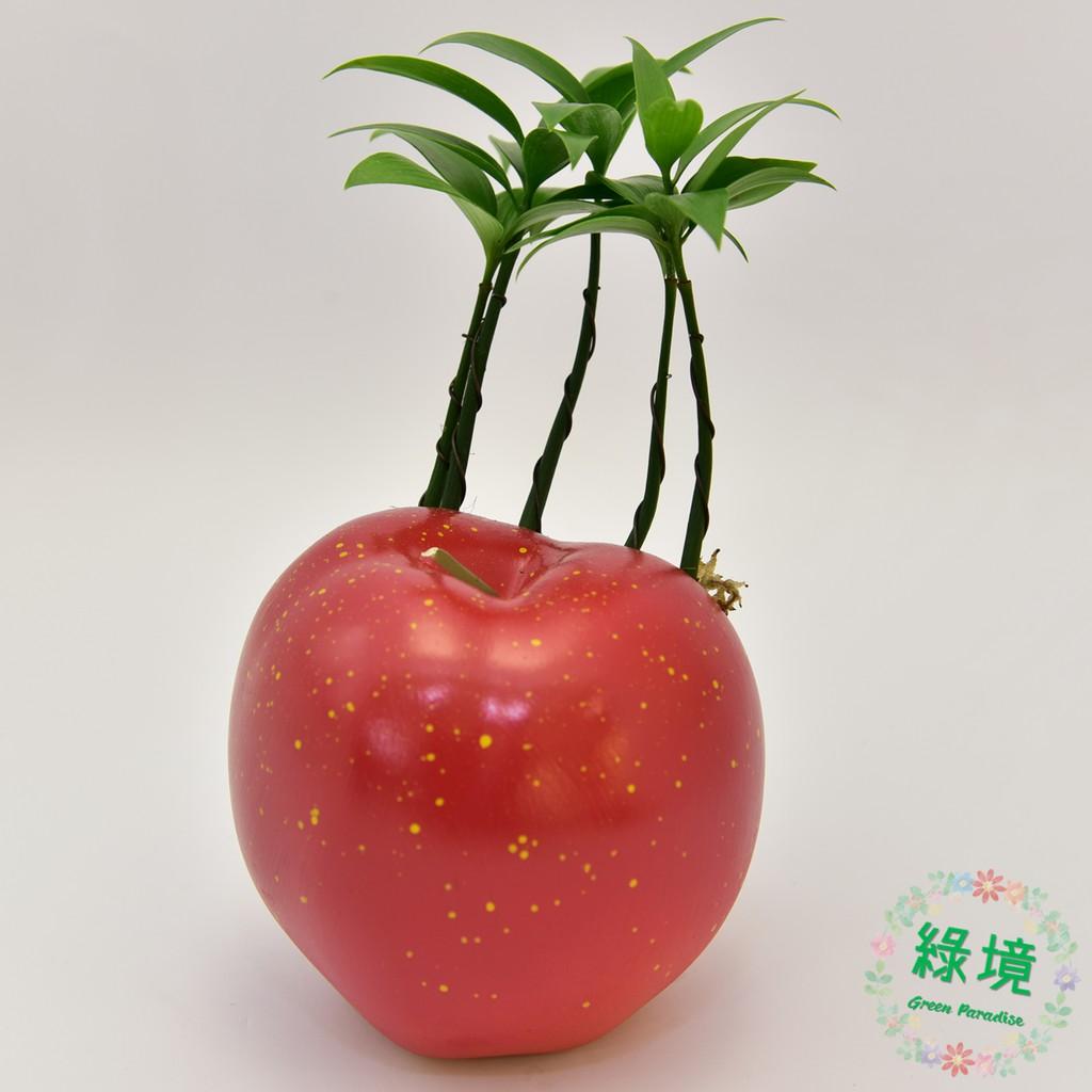 盆栽 竹柏 日本艾草 避邪 蘋果 平平安安 添好運