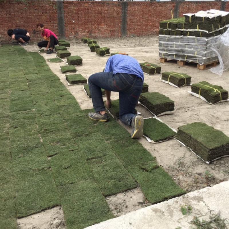 *文青園藝*代客施工鋪草服務.園藝施做.草皮施工.割草服務